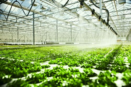 Factors-influencing-the-uptake-of-foliar-feeds.