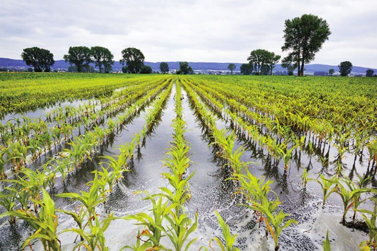 Waterlogging and Wet Soils: Can Crops Recover?