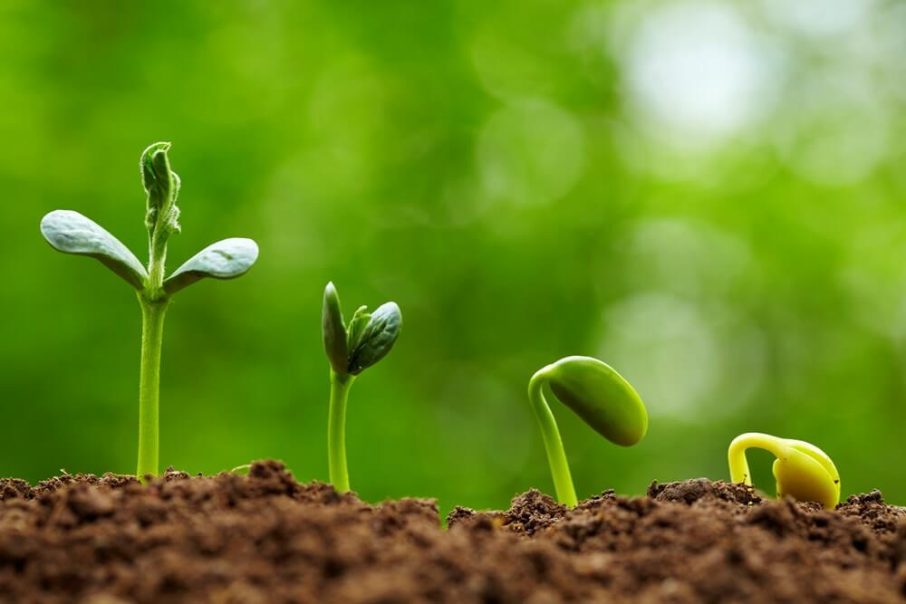 plant-nutrients