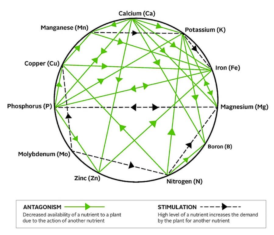mulders-chart